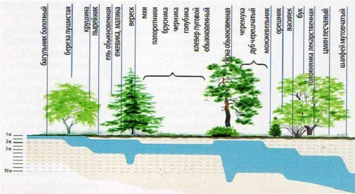 как по растениям определять местоположения воды