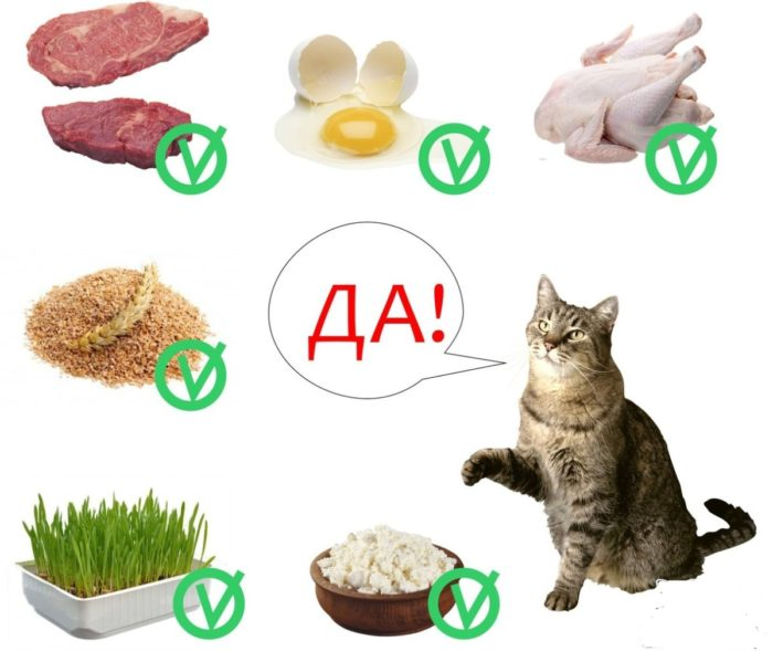 рацион питания кота