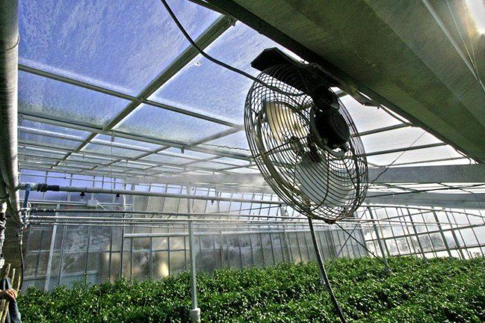 применение вентилятора в теплице