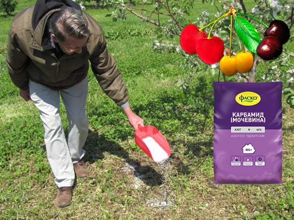 подкормка для вишни