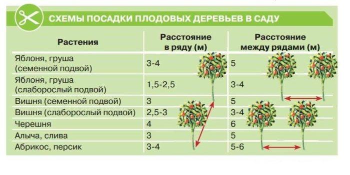 расстояние посадки деревьев