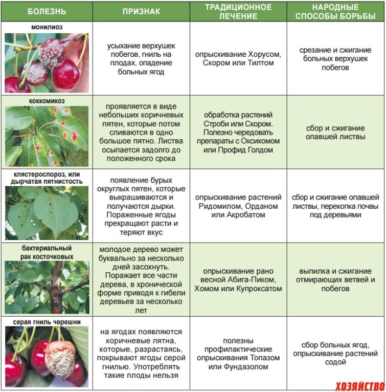 список болезней вишни
