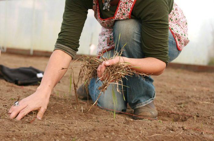 уборка батвы на огороде