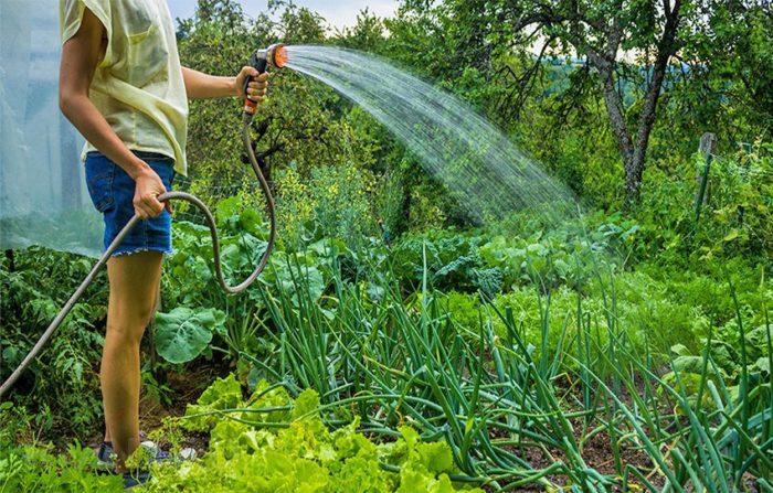 полив в жаркую погоду