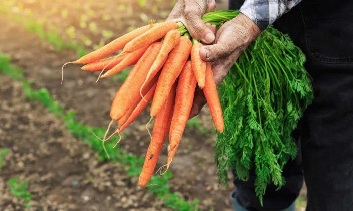 Полезная морковная ботва