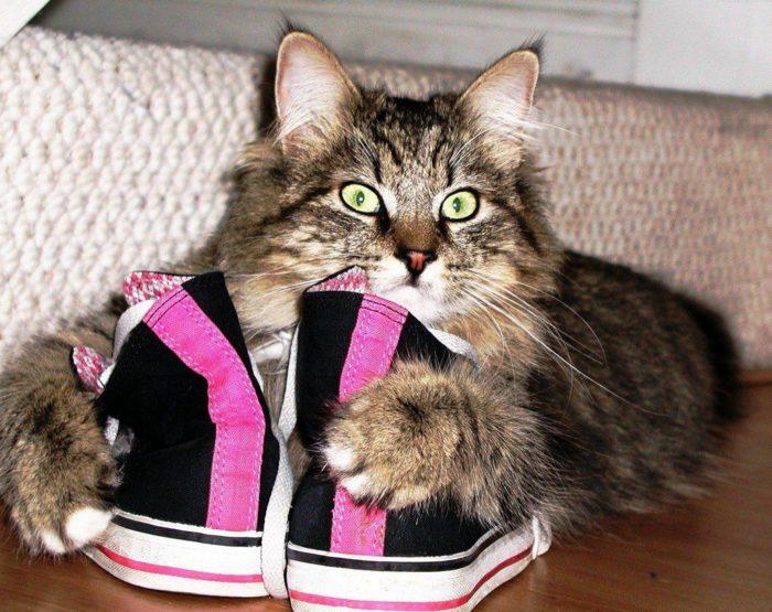 очищаем обувь от кошачьей мочи