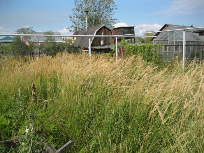 Заброшенный участок зарос травой