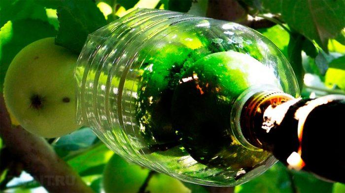 Плодосборник из пластиковой бутылки