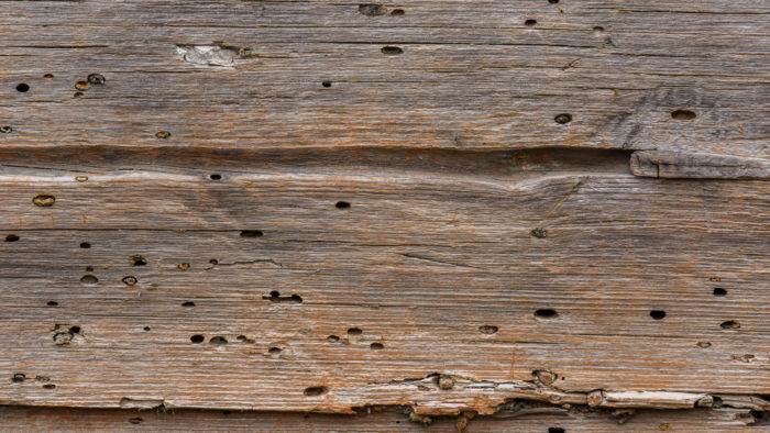 Как защитить деревянный дом от жучка