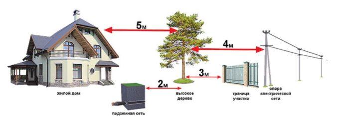 Расположение объектов и растений на участке