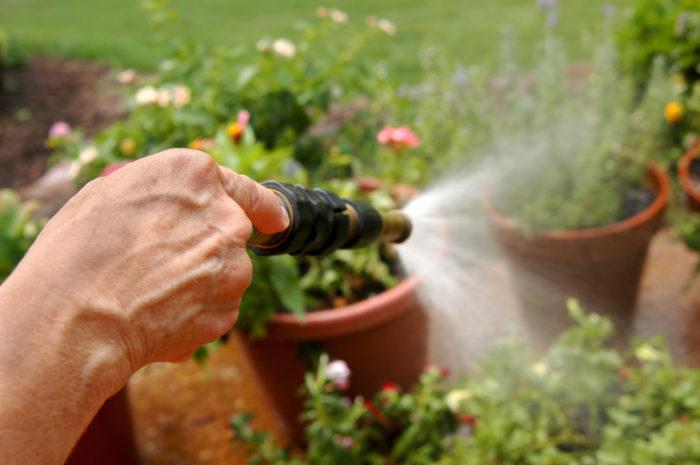 Обработка растений мыльным раствором