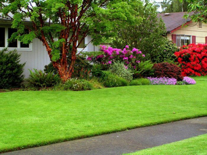 зеленые газоны