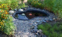 виды декоративных прудов на даче