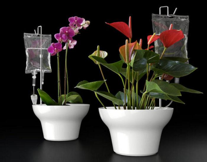 капельный полив для комнатных цветов