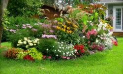цветы для ландшафтного дизайна