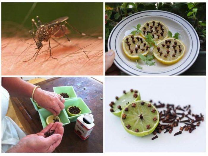 Народные методы избавления от комаров