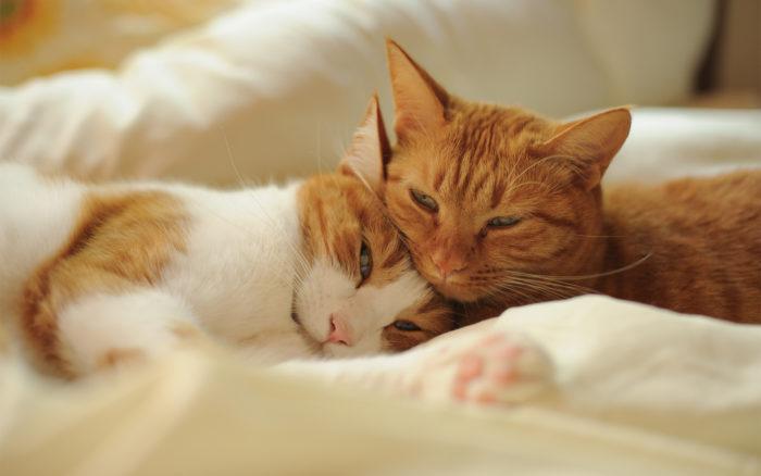 почему нельзя спать с кошками