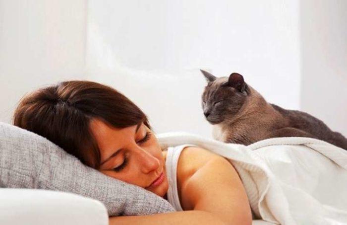 кошка спит на человеке