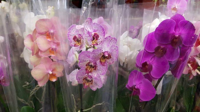 Уход за орхидеей сразу после покупки цветка