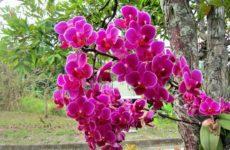орхидея в естественных условиях
