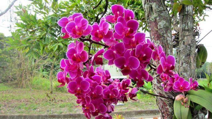 жизнь орхидеи в естественных условиях