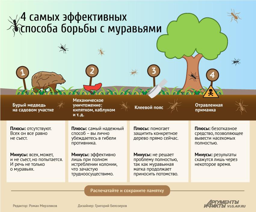 эффективные способы избавления от муравьев