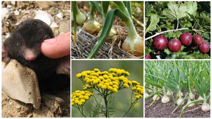 Высаживание отпугивающих растений