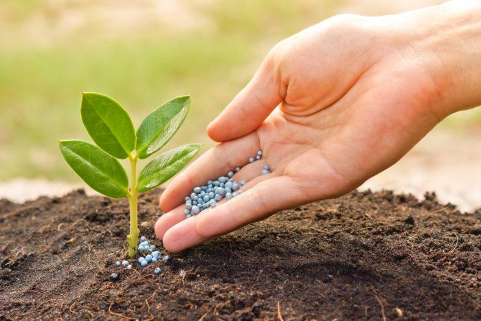 повышаем плодородие почвы на участке
