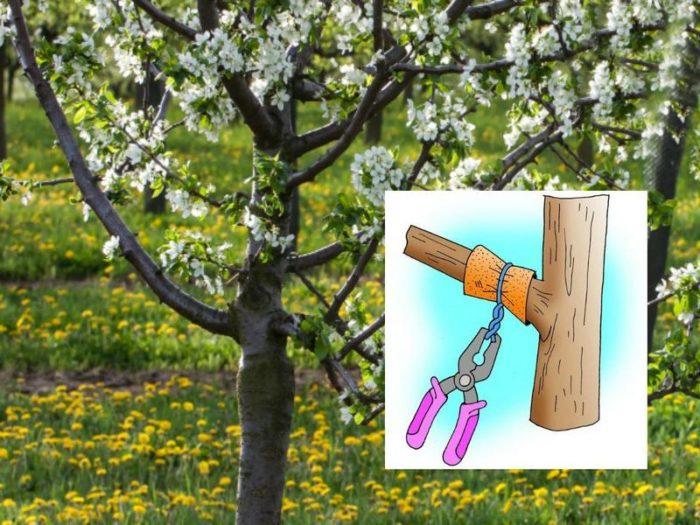 затяжка ветки для цветения