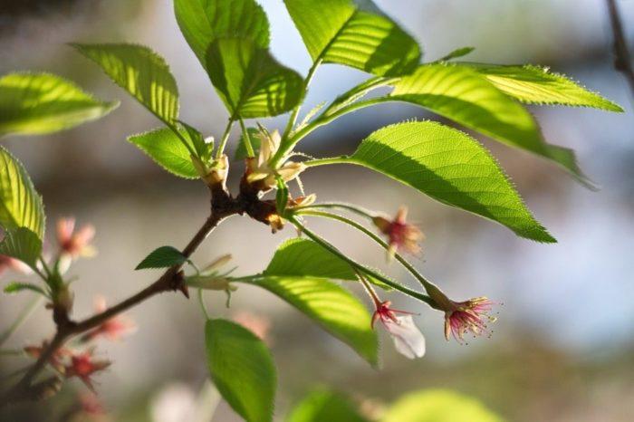 дерево не плодоносит