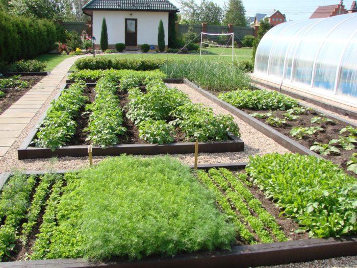 планировка огорода на даче