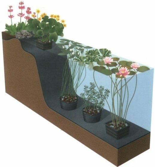 распределение растений в пруду