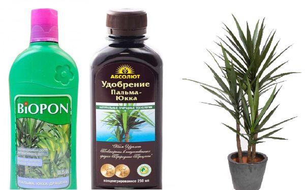 удобрение для пальмы юкка