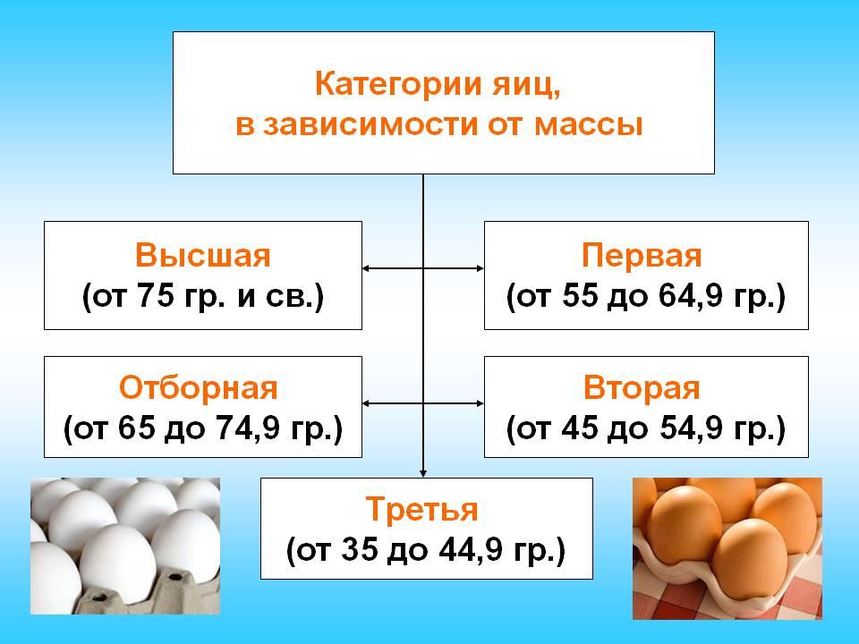 Маркировка и категории куриных яиц