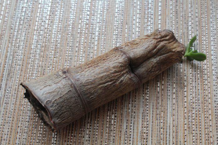 Гниение ствола дерева