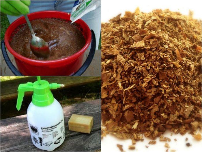 приготовление раствора табачной пыли