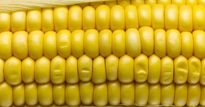 кукуруза борта бондюэль