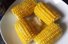 как выбрать кукурузу для варки