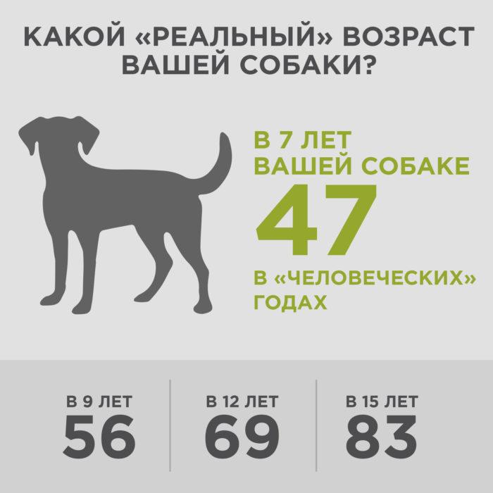 какой реальный возраст вашей собаки