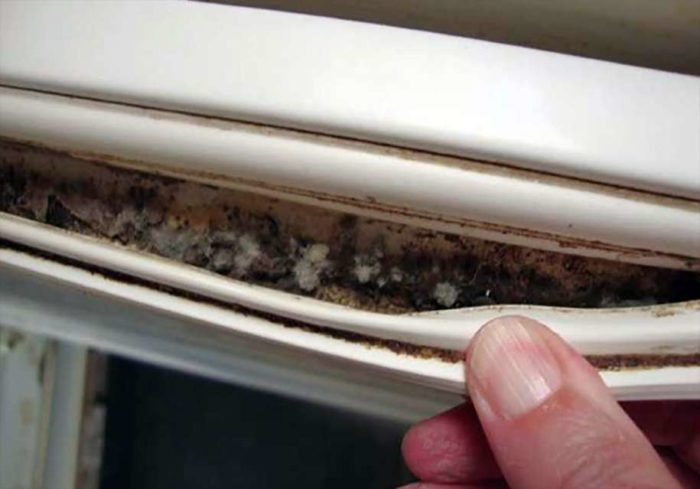 плесень в уплотнительной резинке холодильника