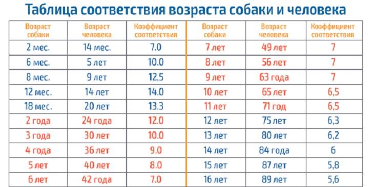 таблица соотвтествия возраста собаки и человека