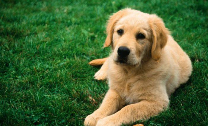 сколько живут домашние собаки