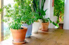 Какие растения защищают дом от неприятностей