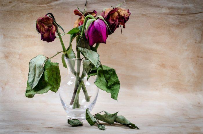 Сухие или завядшие цветы