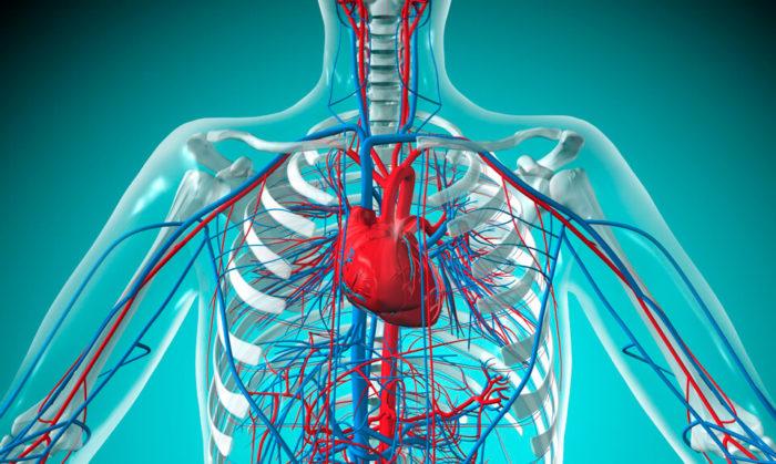укрепление кровеносной системы